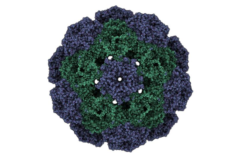 Μύθοι και αλήθειες για τον HPV